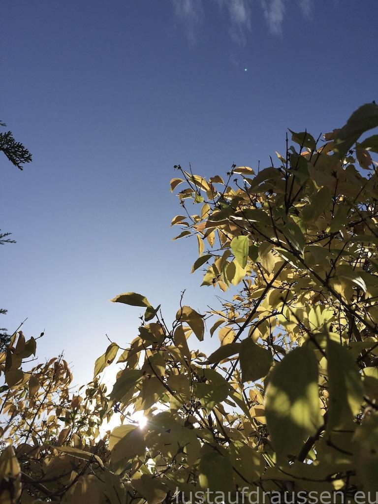 Herbst in Freiberg