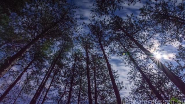 der Mond und der Wald