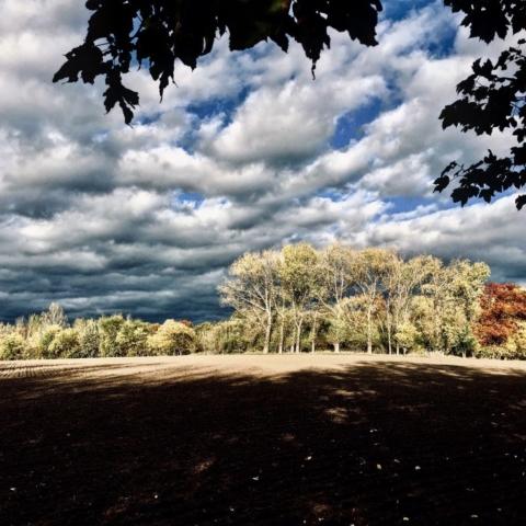 Waldstück bei Meißen